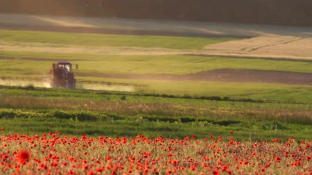 trator : Poppy field with tractor