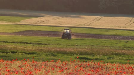haşhaş : Poppy field with tractor