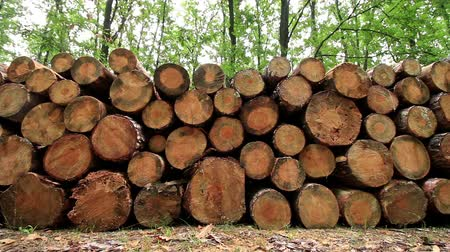 rakás : Big pile of wood in a forest road