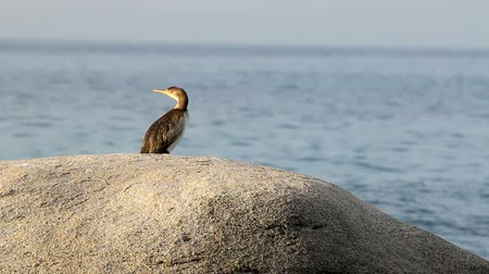 Коста : Costa brava scene with cormorants (Spain,Costa Brava) Стоковые видеозаписи