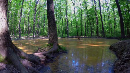 plash : Wallow in the forest at springtime.