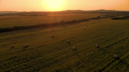 Aerial drone footage in a sunset light over the meadow with bales