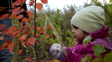 fashion girl : Happy little child. Child walking in warm jacket outdoor. Girl happy in pink coat enjoy fall nature park. Child wear fashionable coat with hood. Fall clothes and fashion concept. Stock Footage