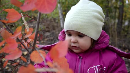 autumnal : Happy little child. Child walking in warm jacket outdoor. Girl happy in pink coat enjoy fall nature park. Child wear fashionable coat with hood. Fall clothes and fashion concept. Stock Footage