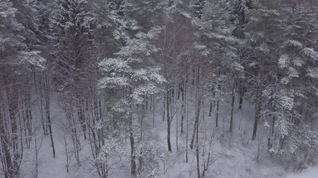 ural : Aerial vertical footage of snowy forest in winter.