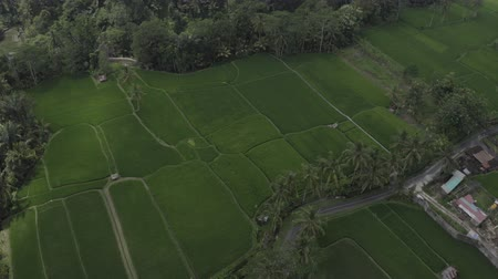 roztavený : Aerial footage of asphalt road with palm trees in beautiful green rice terraces Tegallalang, island Bali, Indonesia. Shadows from clouds. Dostupné videozáznamy