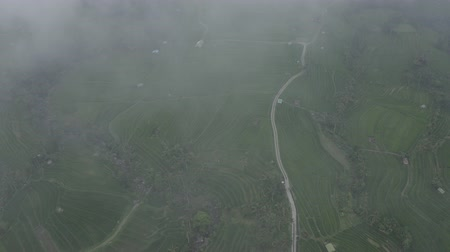 park paths : Aerial view of winding road in Jatiluwih Rice Terraces. Drone flies through clouds and fog. Nature in Island Bali, Indonesia.