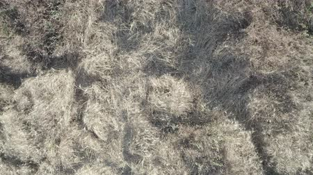 Aerial Top down view of dead dry grass blowing in the wind in Tuscany, lawn texture, background. Stok Video