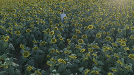 d day : Aerial footage of young girl in white dress walking in sunflower field, Nature. Summer sunny day. Drone moving across a yellow field of sunflowers, Agriculture, harvest concept. D-log.