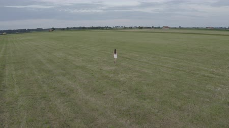 farmhouse : Aerial view of young beautiful brunette woman with long hair in white dress walking alone in large empty field. On the background village houses.