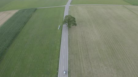 Aerial top down footage of car driving riding on the road among agricultural green and yellow field. Drone flies after and above the car.