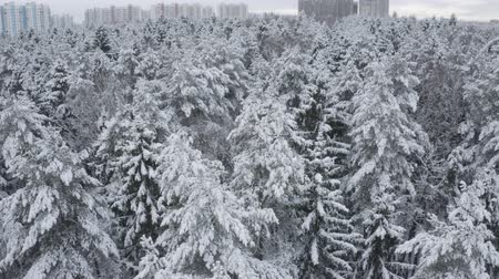finland : Aerial footage of winter forest. Drone flies over snowy tops of fir-trees, pines, spruces. Winter mood. Nature of Lapland. Russia. Stock Footage