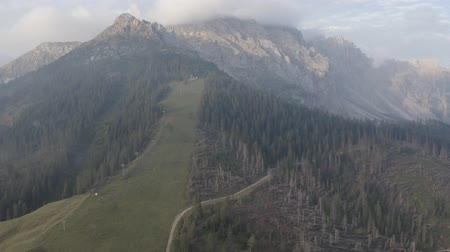 arborizado : Aerial view of Dolomites. Geisler or Odle Dolomites Group. Drone flies above fir tree tops, chopped trees to mountains peak. Rural landscape. Summer South Tyrol, Italy. Vídeos