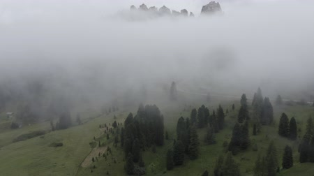arborizado : Drone flies through clouds above fir tree tops, green meadow to mountain peak of Dolomites. South Tyrol, Italy.