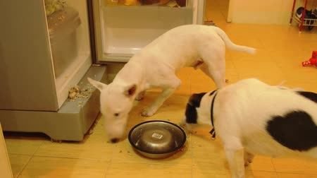 hűtőgép : Funny Hungry Dogs Steal Food from Refrigerator and Eating It. Little Four Legged Thiefs.