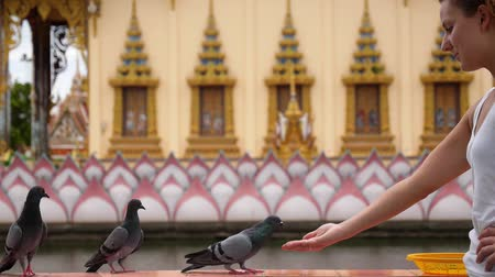 budist : Young Woman Feeds Pigeons in Thai Buddhist Temple. Wat Plai Laem. Thailand. Koh Samui. HD, 1920x1080. Stok Video