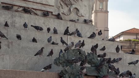 galleria vittorio emanuele ii : MILANO, ITALY - MAY 7, 2017: pigeons sitting on the monument Stock Footage