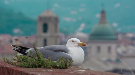 wandklok : SAVONA ITALY - MAY 7 2017: Seagull bird sitting on the fort wall with a city centre on background