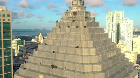 gavilan : MIAMI, FLORIDA, USA - MAY 2019: Aerial drone view flight over Miami downtown. Business building rooftop with birds. Archivo de Video