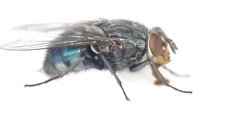 common : Fly, on a white background