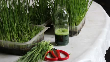 életerő : Wheat-grass and a bottle of fresh squeezed green juice. Juice for vitality & health
