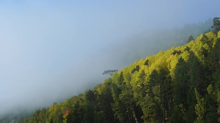 metamorfoza : Misty morning on autumn mountain. Clouds of fog rise fast over forest. Timelaps