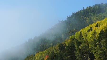 Misty morning on autumn mountain. Clouds of fog rise fast over forest. Timelaps