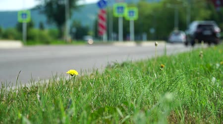 придорожный : Car, bus rides on road. Blurred background. Close up shot, focused on grass in foreground. Summer day, car traffic in provincial town. Handheld shoot near roadside