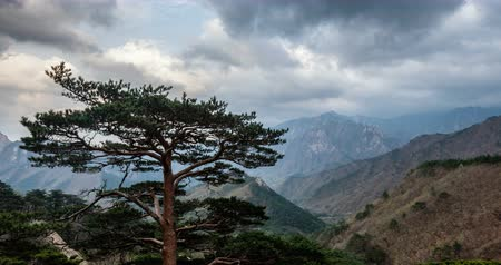 sokcho : Timelapse of tree and cliff, Seoraksan National Park, South Korea