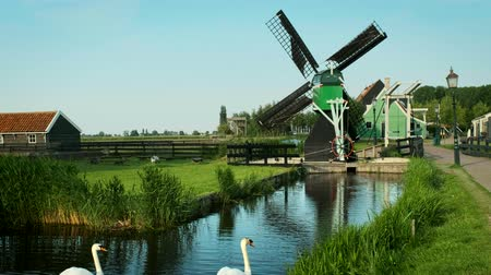 antiquado : Swans in canal at windmills at Zaanse Schans in Holland. Zaandam, Netherlands