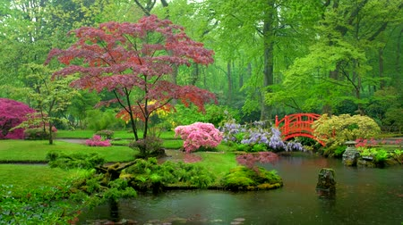 клумба : Japanese garden, Park Clingendael, The Hague, Netherlands