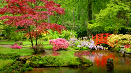 pingos de chuva : Japanese garden, Park Clingendael, The Hague, Netherlands