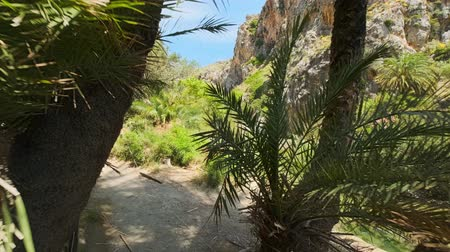 aegean sea : Walking in the palm forest. Crete island, Greece Stock Footage