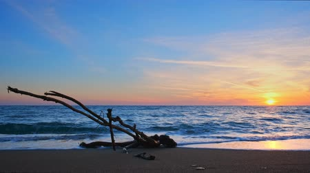 Киклады : Оld wood trunk snag in water at tropical beach on beautiful sunset