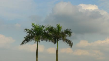 бульвар : palm trees and sky