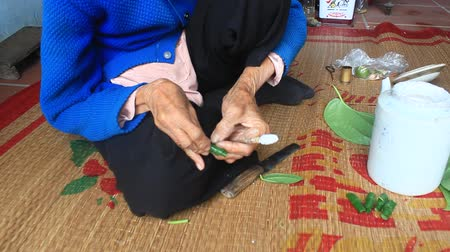 receptacle : Haiduong, Vietnam, December, 27, 2014: Woman Betel and Areca with Betel making. Betel chewing Customs of Vietnam is longstanding print Stock Footage