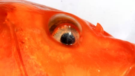 carne : Eyes and mouth of fish