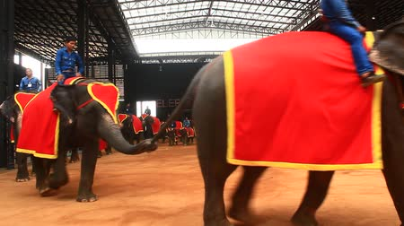 цирк : Pattaya, Thailand, July, 14, 2015: the show of Elephants