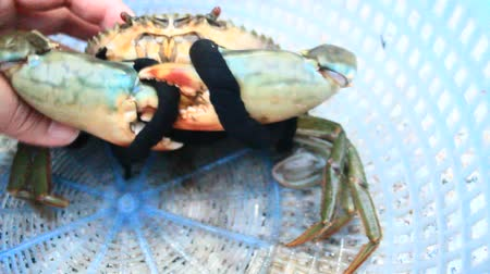 Hand holding sea crab