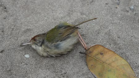 fatality : dead bird on sand