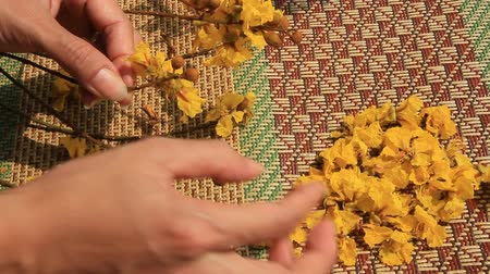 Hands sprinkle yellow flowers on the mats