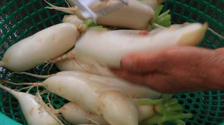 rabanete : Cut white radish with a knife