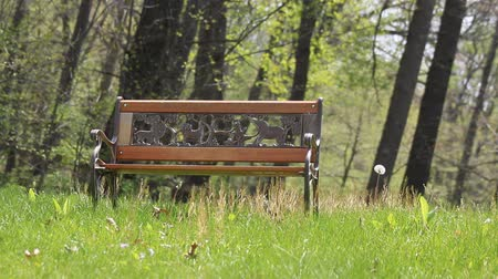 dmuchawiec : A childrens park bench with Dandelion in the Spring season. Wideo