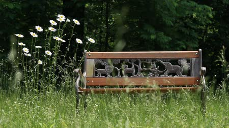 kamilla : A park bench with daisies