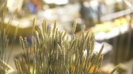 ás : Close up of ripe wheat being sold at a farmer s market. Blurred people buying staff in the background. Handheld real time close up shot