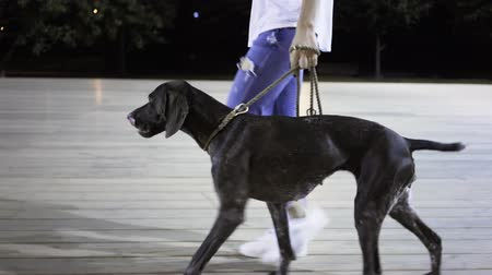 verdadeiro : Unrecognizable woman wearing jeans and a T shirt is walking with her big black dog in a park on a summer night. Tracking real time medium shot