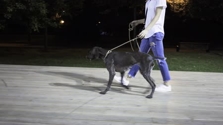 plavé vlasy : Unrecognizable young woman wearing jeans and a T shirt is walking with her big dog in a park on a summer night. A side view. Tracking real time medium shot