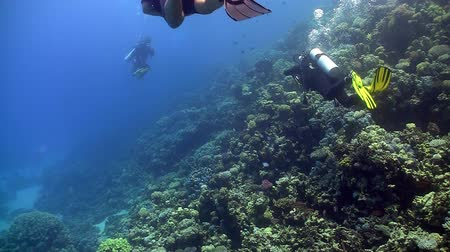 rafa : group of divers swims over coral reefs. Red Sea Wideo