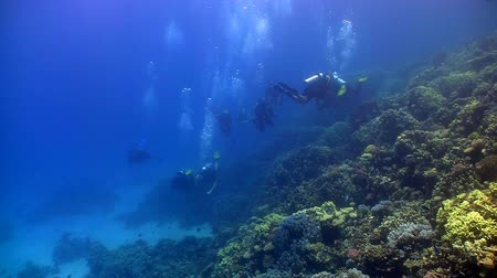mergulhador : group of divers swims over coral reefs. Red Sea Vídeos