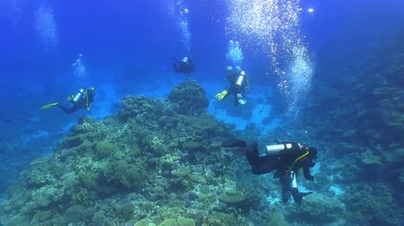 potápěč : Group of divers swims over coral reefs. Red Sea